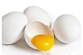 اعطای نمایندگی تخم مرغ تلاونگ