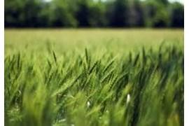 اعطای نمایندگی محصولات غذایی مزرعه سبز