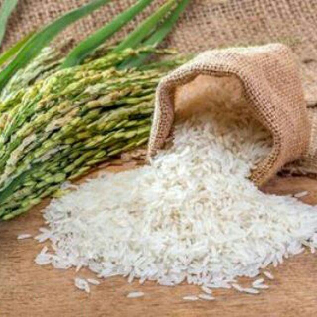 اعطای نمایندگی برنج هندی 1121 بهراه