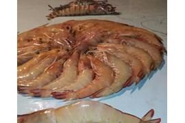 اعطا نمایندگی فروش محصولات ماهی و میگو جزیره قشم در سراسر کشور