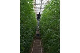 متقاضی نمایندگی محصولات کشاورزی و سموم