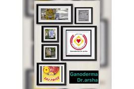 جذب بازاریاب فروش و توزیع قارچ گانودرما دکتر آرشا در سراسر کشور