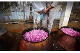 جذب بازاریاب فروش گلاب و عرقیات فرزانه