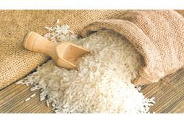 به تعدادی کارمند فروش در زمینه برنج نیازمندیم