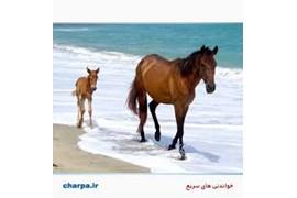 جذب بازاریاب تامین کالای مصرفی حیوانات خانگی و اسب