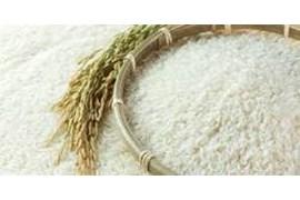 جذب بازاریاب فروش برنج کشاورز