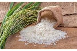 فروشگاه اب حیات  (برنج)